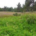 Bjurtomta, en övergiven fäbod